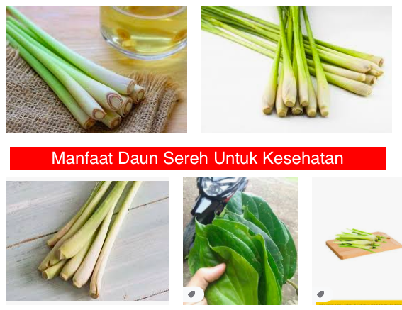 manfaat daun sereh